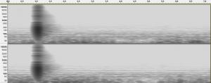 Reverb-Pomona-SeaverTheater-spectogram.jpg